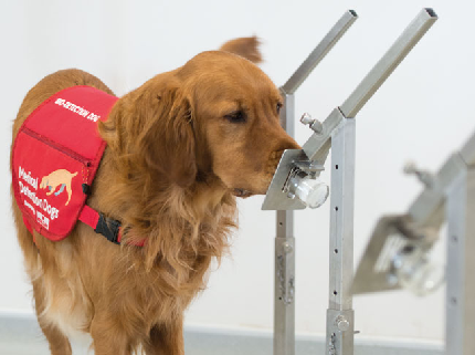 Super Sniffers: An Introduction to Medical Detection Dogs - Super Sniffers: An Introduction to Medical Detection Dogs - Webinar donation